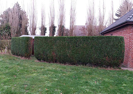 Entretien de jardins par Clôt'n Co à Harnes